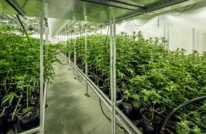 H32B Medical Marijuana Industry Expansion
